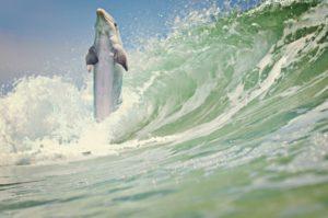 dolphin-1200924 (2)